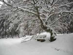 Ruhebank im Schnee